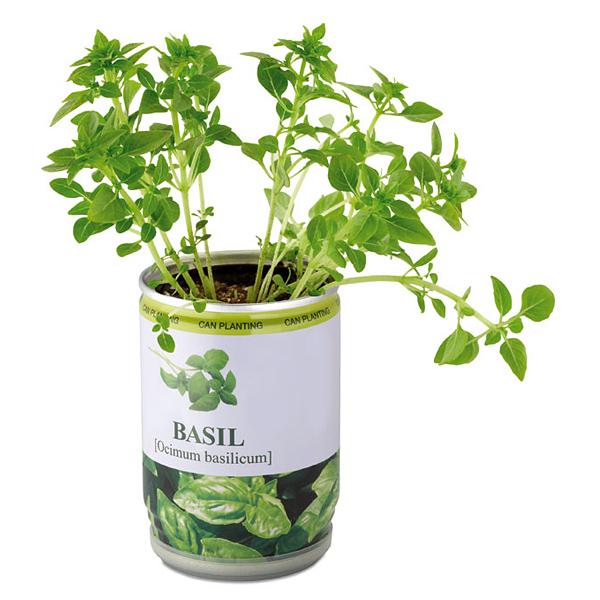 Pflanze aus der Dose (bedruckbar)