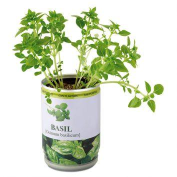 Basilikum-Pflanze-01-bedruckbar-BASIL-bedruckbar-werbegeschenk-werbeartikel-rosenheim-muenchen.jpg